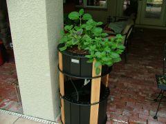 The Urban Food Forest Mini aquaponic system