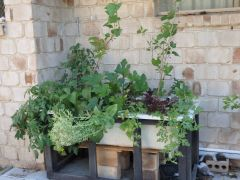 Roma Tomatoes, cucumber, strike mulberries, mini watermelon, lettuce, few others