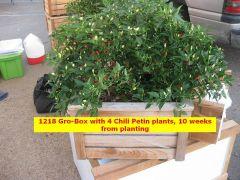 Chili Petin 1218 1