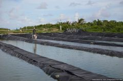 SNAPPER Fish Farm