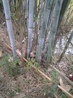 post-4658-0-02596000-1464178493_thumb.jp