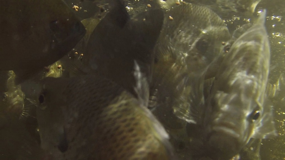 20170621-bg-underwater-close.jpg