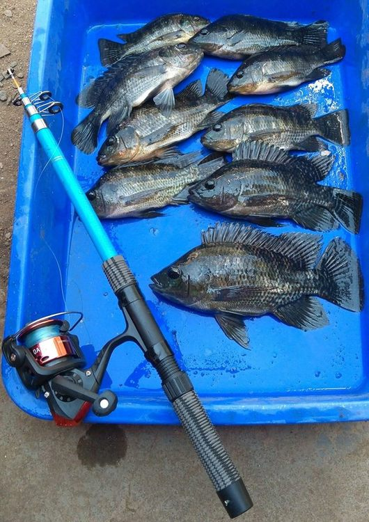 Fish catch 030318.jpg