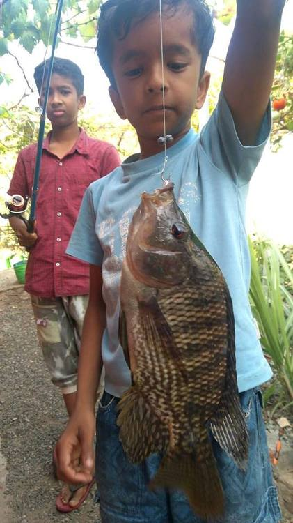 Fish catch today.jpg