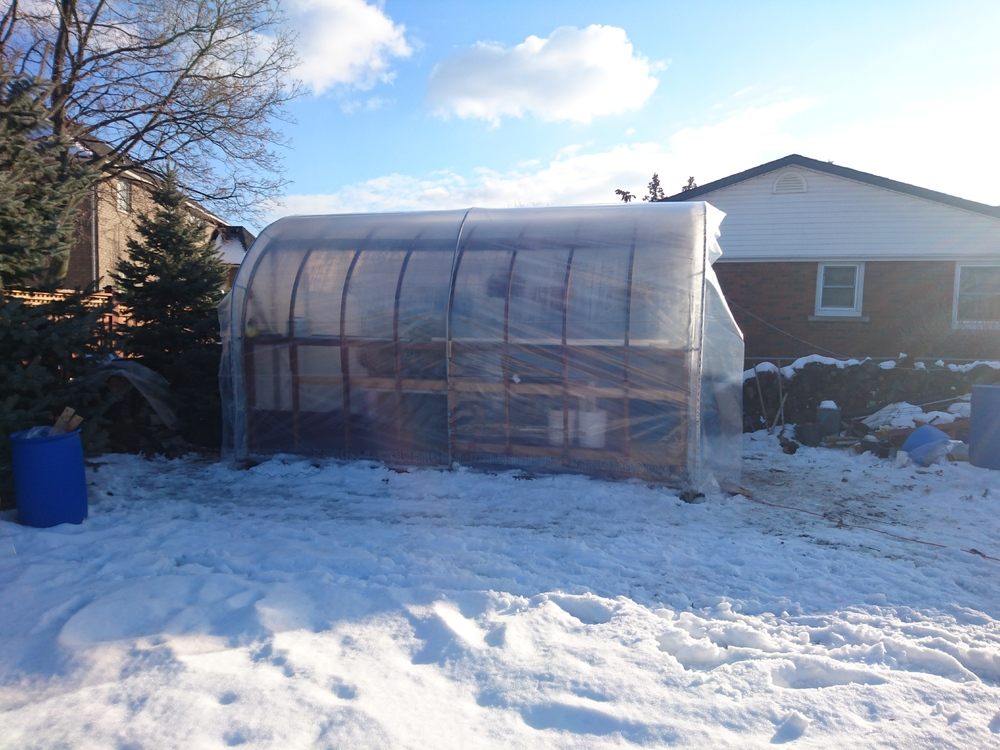 greenhouse winter 2018 .JPG