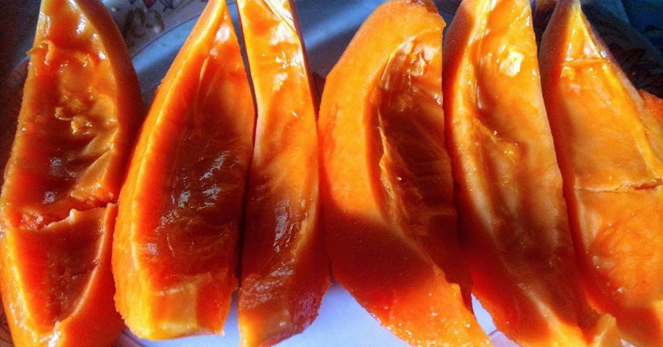 Papaya in aquaponics sand culture 130918.jpg