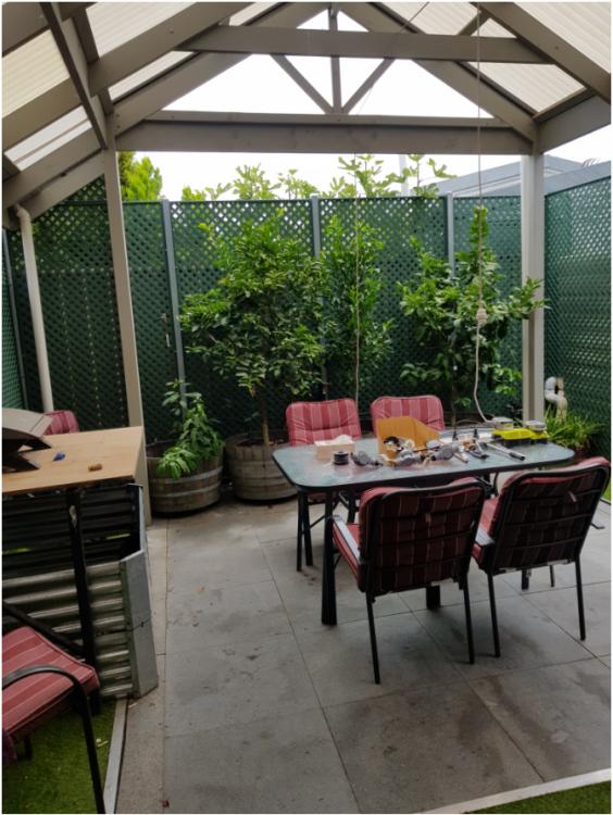 My backyard 2020.png