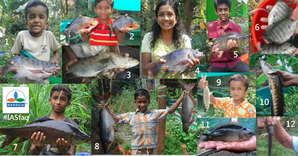 IAS id the fish.jpg